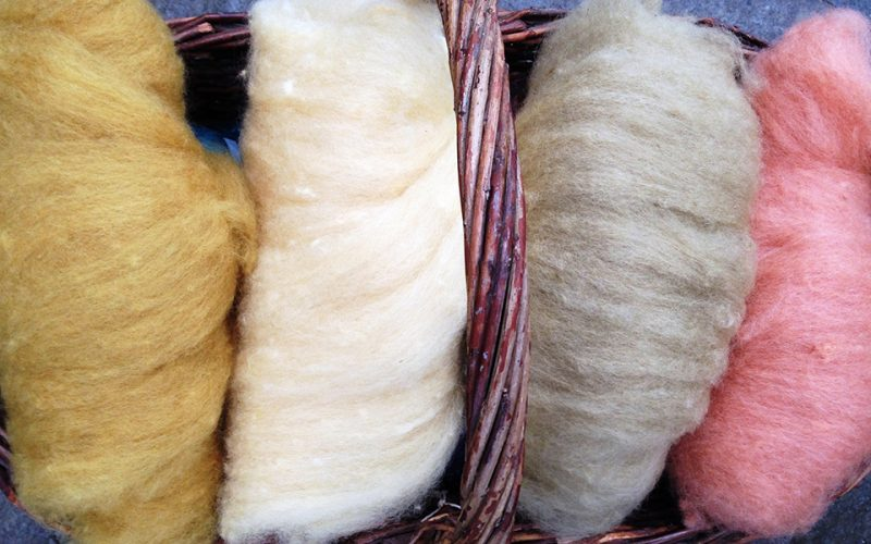 Fine dyed wool for spinning.